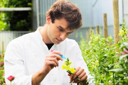 Scientist examining flower in garden