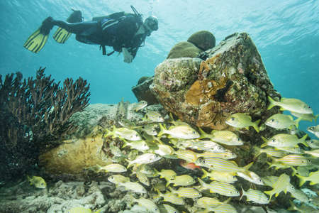 seventy: Diver examining underwater reef
