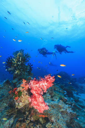 Divers swimming in coral reef LANG_EVOIMAGES