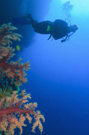 free diver: Diver swimming in coral reef LANG_EVOIMAGES