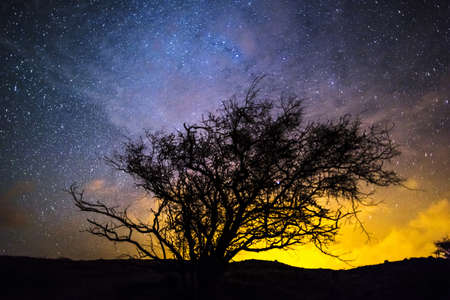 Silhouette of tree against night sky LANG_EVOIMAGES