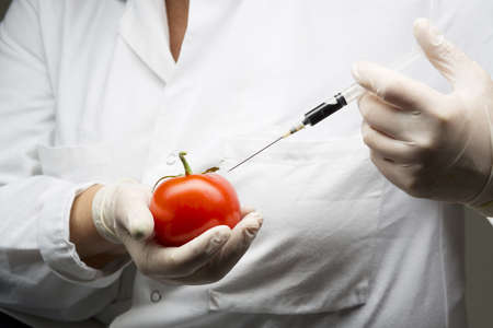 Scientist injecting tomato with syringe