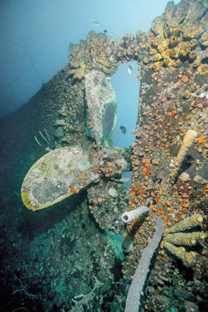 Coral growing on underwater shipwreck