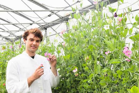 conservatories: Scientist examining flower in greenhouse