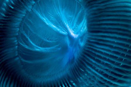 Cerca de medusas bajo el agua