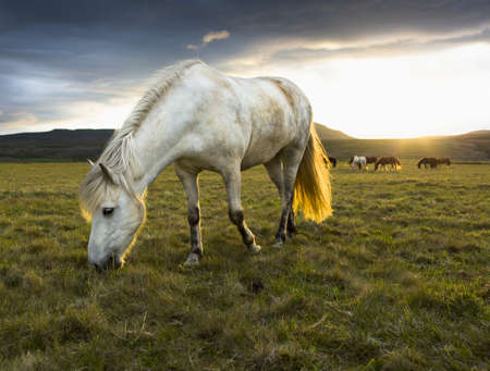 remoteness: Horse grazing in rural field