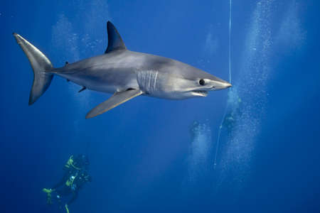 Divers swimming with shark LANG_EVOIMAGES