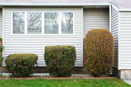 housing lot: Trimmed hedges of different sizes