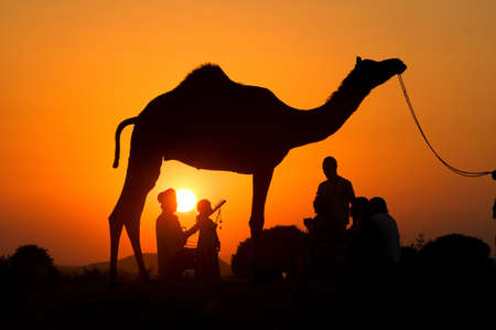 Silhouetted dromedary camel and traders,Pushkar Camel Fair,Rajasthan,India LANG_EVOIMAGES