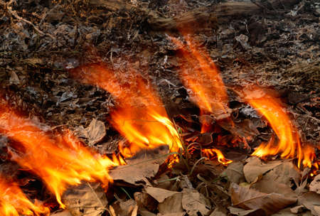 ablaze: Controlled fire for wildfire prevention,Kanha National Park,India