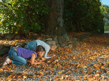 Two girls searching on autumn leaves