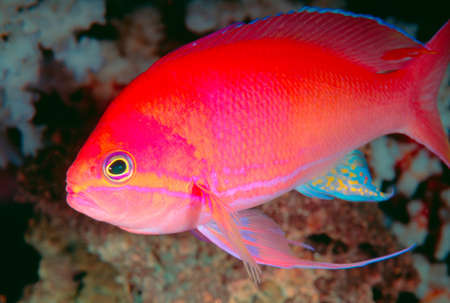 Close-up of a bright tropical fish LANG_EVOIMAGES