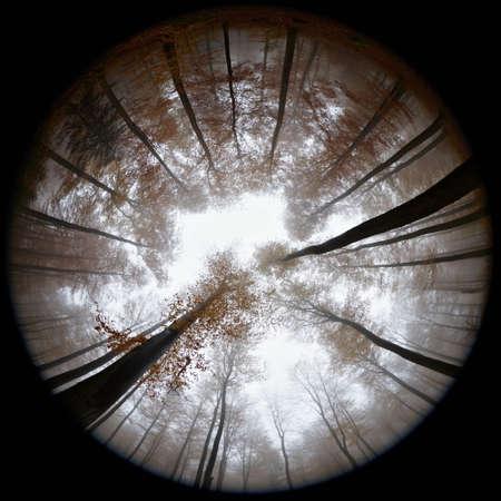 tallness: Fisheye view of autumn forest in mist