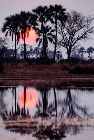 Okavango Delta: Sunset,Okavango Delta,Botswana LANG_EVOIMAGES