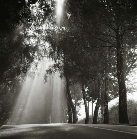 alongside: Light shines through trees alongside a country road on the island of Rugen,northern Germany