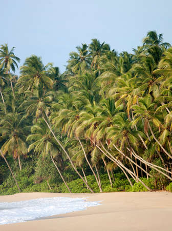 getting out: Palm trees and beach on the Indian Ocean at Tangalle,Sri Lanka