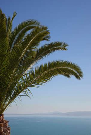 seascapes: Palm tree overlooking Gulf of Tunis,Sidi Bou Said,Tunisia