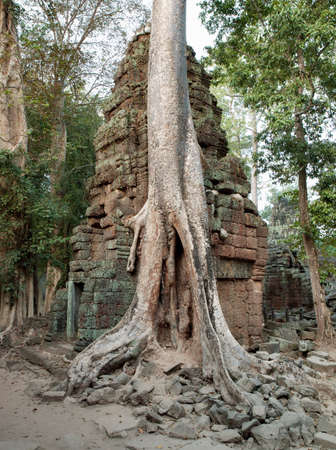 phrom: Thick tree roots grow over the ruins of Ta Prohm temple at Angkor,Siem Reap Province,Cambodia
