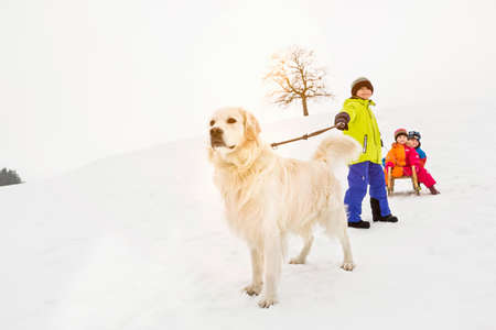pooches: Boy with dog pulling two friends on toboggan in snow LANG_EVOIMAGES