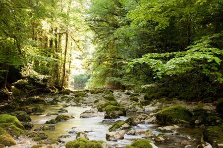 luscious: A river in the forest near Col de la Faucille,Jura region,France