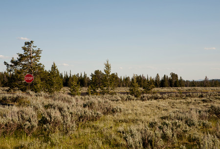 out of context: Stop sign amongst trees and grass,Grand Teton National Park,Wyoming,USA