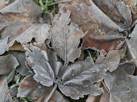 Close up of leaves frozen in winter LANG_EVOIMAGES