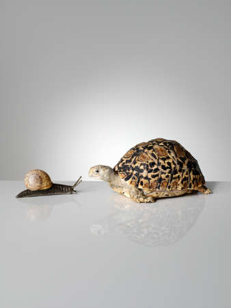 Snail and tortoise