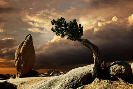joshua tree national park: Ethereal shot of landscape,Joshua Tree,California,USA LANG_EVOIMAGES