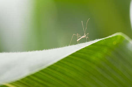 frailty: Close up of insect on green leaf