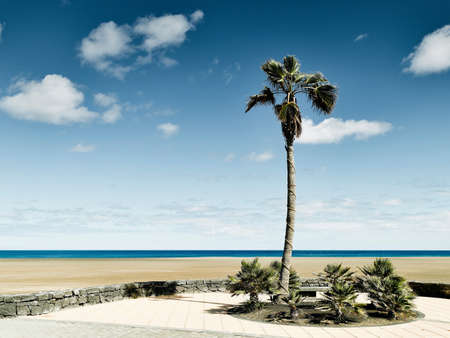 Palm tree at Lanzarote, Spain LANG_EVOIMAGES
