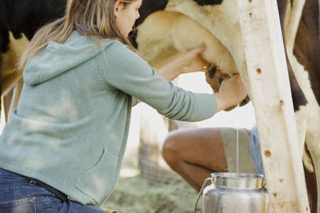 vacas lecheras: Young woman milking cow