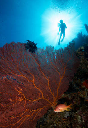 Diving Marovo Lagoon
