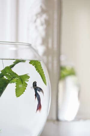 Close up goldfish bowl on sunlit window sill LANG_EVOIMAGES