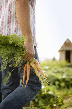 sleeve: Cropped image of farmer holding bunch of carrots