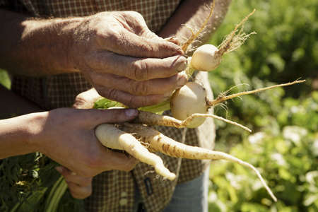 Cropped image of male and female hands holding root vegetables