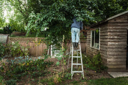 Man on ladder in tree LANG_EVOIMAGES
