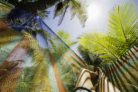 furniture part: Female legs in hammock amongst palm trees, Barbados