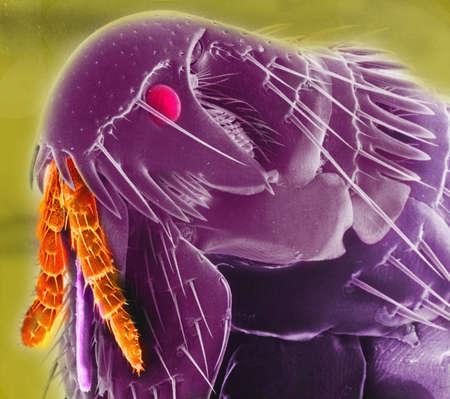 revulsion: Scanning electron micrograph (SEM) of a flea head