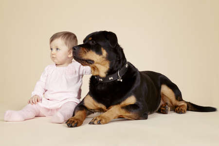 pooches: Studio portrait of baby girl petting large Rottweiler dog