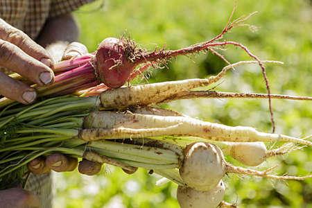 sleeve: Cropped image of farmers hands holding root vegetables