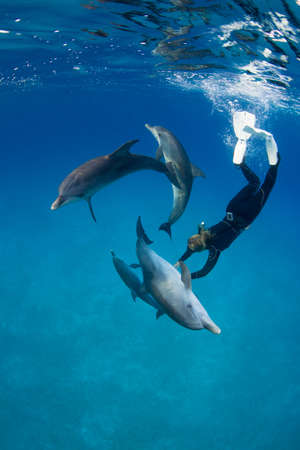 bahama: Frolicking with dolphin