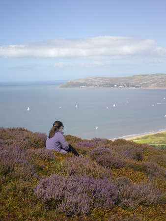 obscuring: Walker in heather landscape, Conwy Mountain, North Wales LANG_EVOIMAGES