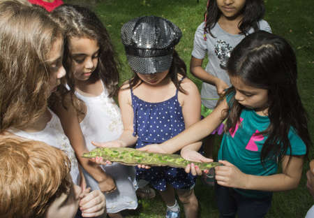 Group of children looking at tree bark at summer camp
