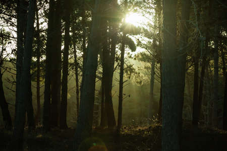 Dark forest with sunlight and silhouetted trees
