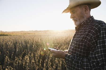 Senior male farmer reading text message on smartphone in soybean field, Plattsburg, Missouri, USA