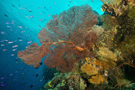 Coral and marine plants, Uepi Point, Uepi Island, New Britain, Solomon Islands