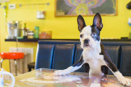 curiousness: Portrait of cute dog on kitchen table