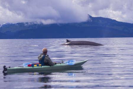Male sea kayaker watching fin whale, Kodiak, Alaska, USA