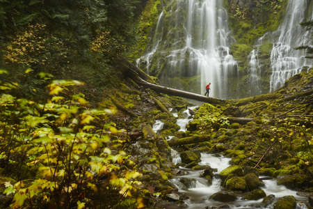 proxy falls: Male hiker crossing tree trunk over Proxy Falls, Oregon, USA