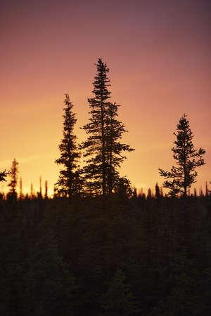 Silhouette of fir trees at sunset, Wrangell St. Elias, Alaska, USA LANG_EVOIMAGES
